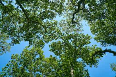beautiful blue sky branches bright